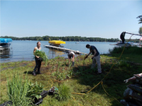 Project spotlight: Mitigating septic discharge with riparian vegetation