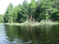 Research Spotlight: Coarse Woody Habitat in Inland Lakes