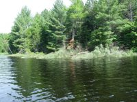 Research Spotlight: Coarse Woody Habitat in Inland Lakes